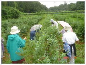 農園視察07/07/14-01
