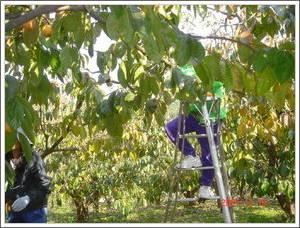 農園視察07/11/10-03