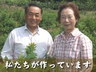 西条柿のほりお農園